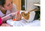 Tiergestützte Therapie verbessert Sozialverhalten von Patienten mit Hirnverletzungen